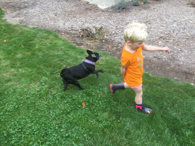Cute Little Blond Girl Play Childhood Outdoors Grass Dog Playful Casual Blond Hair Little Black Dog Kids in Sonoma County CA Santa Rosa