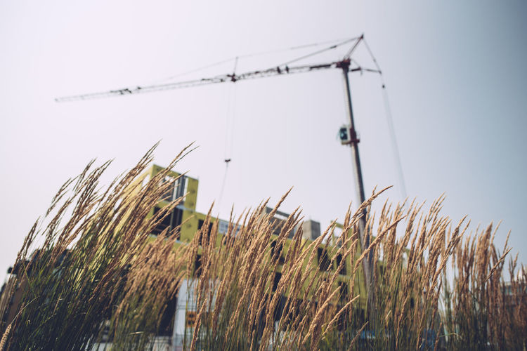 Agriculture Architecture Beauty In Nature Building Exterior Built Structure Clear Sky Crane Crane - Construction Machinery Day Environment Field Focus On Background Grass Growth Land Landscape Low Angle View Nature No People Outdoors Plant Sky Timothy Grass