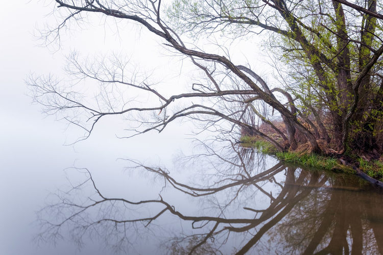 Reflections & Fog Calm Foggy Weather Reflection Water's Edge Beauty In Nature Branches And Leaves Calm Water Fog Foggy Foggy Morning Lake Landscpae Nature Outdoors Poor Visibility Reflections Scenics - Nature Tranquil Scene Tranquility Visibility Water