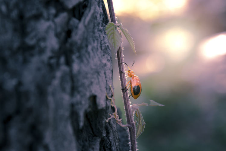 Close-up of insect on plant by tree trunk during sunset