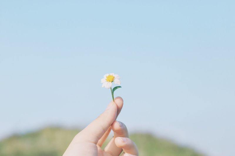 Flower Human Hand Copy Space Fragility Human Body Part Holding Real People One Person Freshness Close-up Clear Sky Nature Low Angle View Outdoors Flower Head Day Beauty In Nature Bouquet