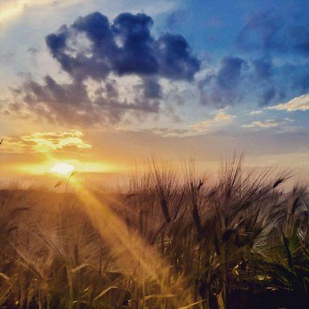 Today's sunset Sunset Sun Summer Wheat Cloud Cloudporn SunExpress Sunsethub Sunset_stream Viewmysunset Lumians Lumia930 Lumiaphotography Igworldclub Instagrammers Mik WeLoveLumia