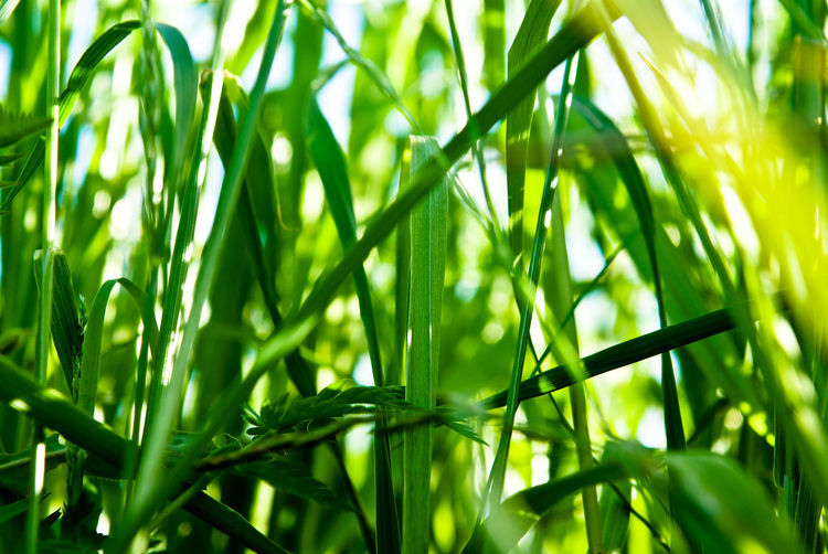 natural green grass Backgrounds Beauty In Nature Close-up Day Field Fragility Freshness Grass Grass Green Color Growth Nature No People Outdoors Plant Sunlight