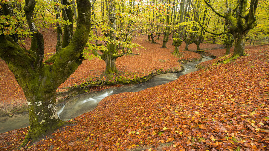 Plants and trees by stream in forest during autumn