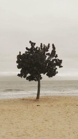 Beachphotography Beachtime♥♥ Tree Trees