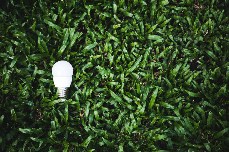 High angle view of light bulb against trees