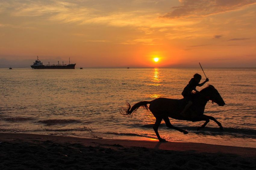 Race horse under sunset Sunset Sky Water Sea Cloud - Sky Transportation Animal Animal Themes Nature Beauty In Nature Silhouette Orange Color Domestic Animals Mammal Sun Sunlight Beach Riding Land