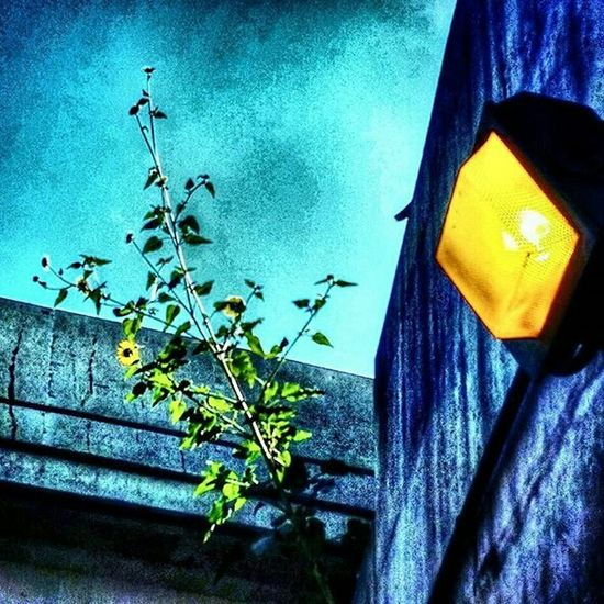Power of nature. Plant Concrete Wall Bridge Naturepower Eyeemchicago Hanging Out Taking Photos