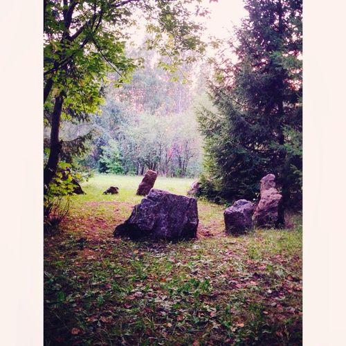 Природа мои фото фотонателефон учусьфотать Landscape MyPhotography Likeforlike 10likes Photo Phone Vscocam