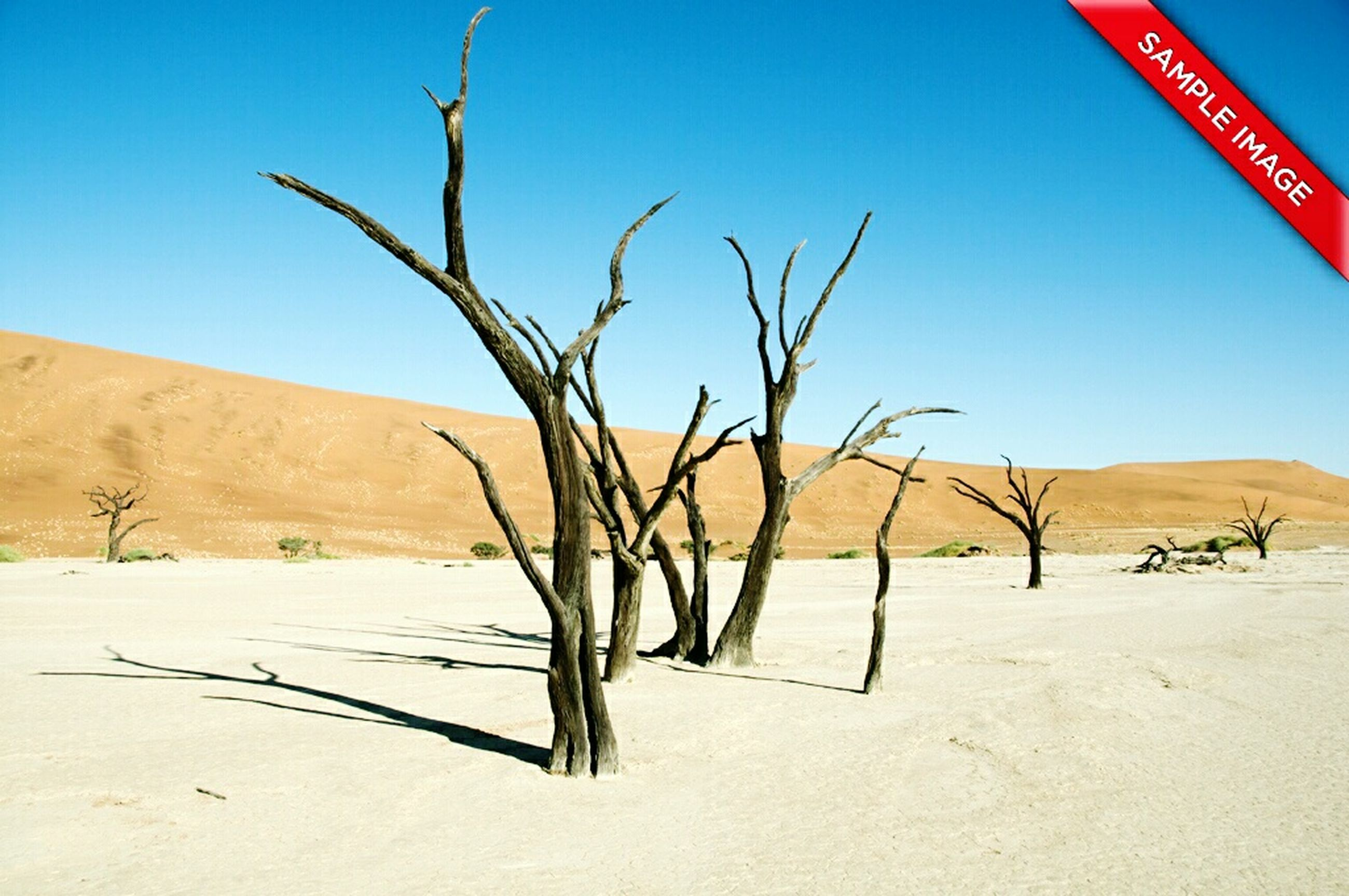 desert, clear sky, landscape, blue, arid climate, tranquility, sand, tranquil scene, nature, barren, sunlight, bare tree, copy space, remote, non-urban scene, day, tree, no people, sky, dry