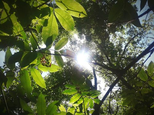 Tree Growth Nature Low Angle View Green Color Leaf Branch Outdoors Beauty In Nature Day Forest Plant Freshness Sky No People Flowers, Nature And Beauty Let's Go. Together. Gypsy Travel Photography Travelamerica Traveling Travellerslife Muchlove World Peace Beauty In Nature