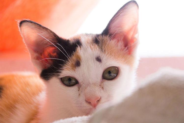 Cat Cat Lovers Cat Portrait Cat Watching Cat ♡ Meow Close-up Pets One Animal Pet Portraits