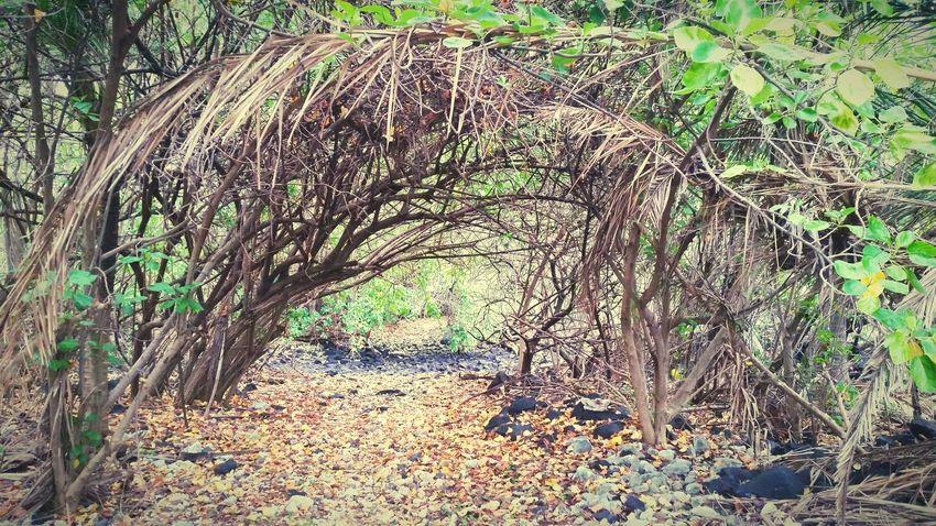 Hawaii Napo'opo'o Hike Trees