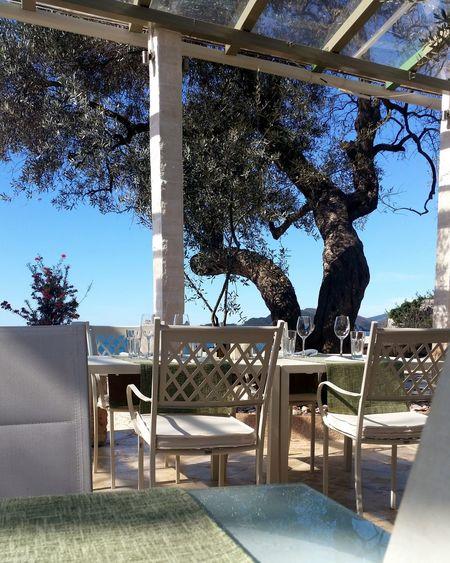 Montenegro SanStefano Amazing Place Beautiful View Olive Sunny Day Morninglikethis Nofilter Coffe Restaurant
