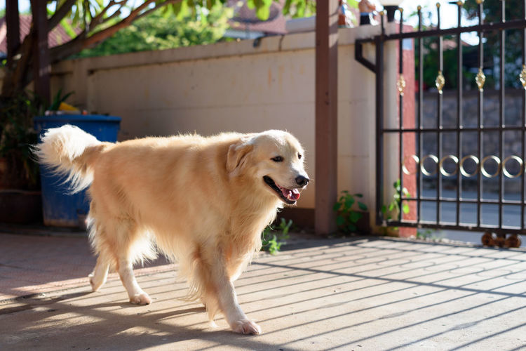 Dog playing and running in morning time One Animal Mammal Animal Themes Animal Dog Canine Pets Domestic Domestic Animals Vertebrate No People Day Sunlight