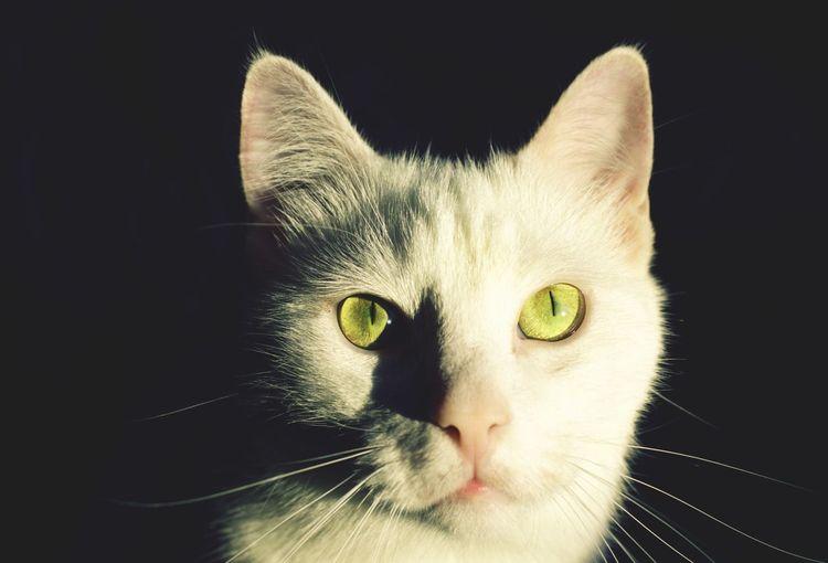 Dangerous Cat