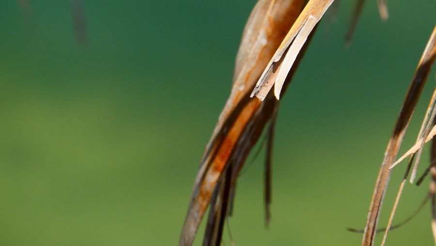 Close up of palm fronds