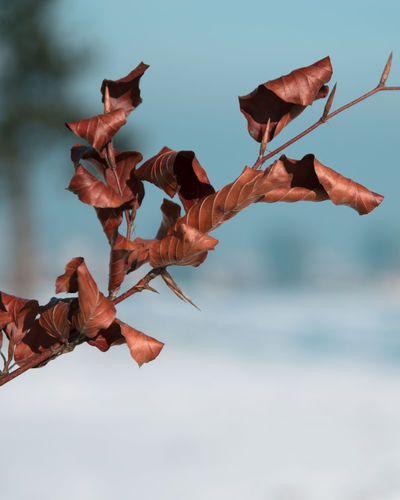 Close-up of hand with leaves in sea against sky