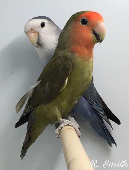 The Week On EyeEm SwallowEquatics Southend Parakeets Birds Pet Portraits Pet Portraits