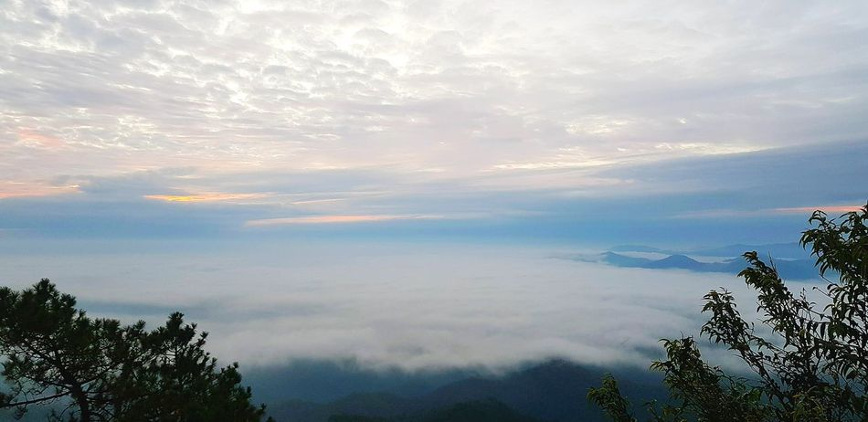 Sea Fog - Phu Chi Phur, Mae Hong Son New Destinations Finding New Places Iamonmywaytoeverywhere Back To Nature Travelling Thailand Travel Photography Travel Together Letsgosomewhere Year2018 Traveladdict Love To Travel Rehab ♥ Natural Landmark Take A Time Keep Shooting Thai Traveler Finding Myself Need More Space Sea Fog How Beautiful Nature Are Reallly Aswm Love To Take Photos ❤ Up In The Air Tree Cloud - Sky Nature Forest Mountain Sky Scenics EyeEmNewHere