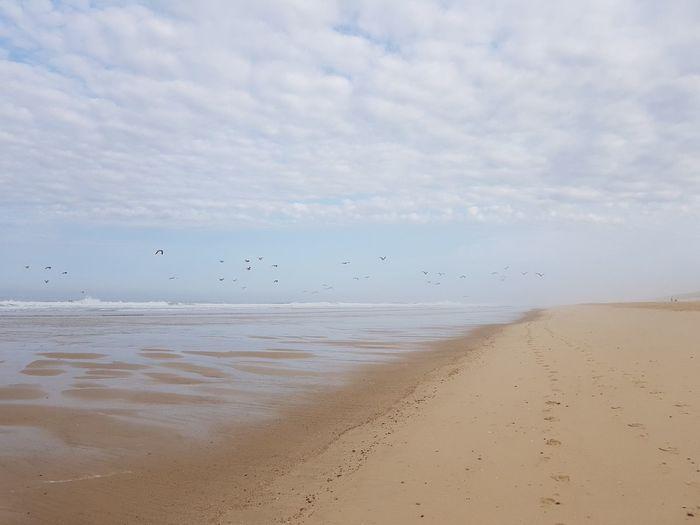 Low Tide Bird