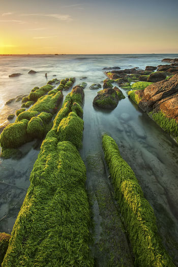 Green carpet Hanging Out Taking Photos Check This Out Hello World That's Me Enjoying Life Nature Landscape View Scenery Ocean Travel Beach Malaysia Sunset Welcome Weekly Sea Twilight Vacation Background Wallpaper Mossy Leading Line