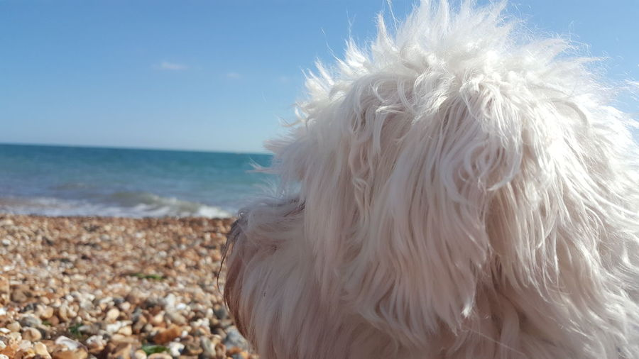 Thinking Friendship Water Sea Pets Blond Hair Beach Wave Clear Sky Dog Calm Tranquil Scene