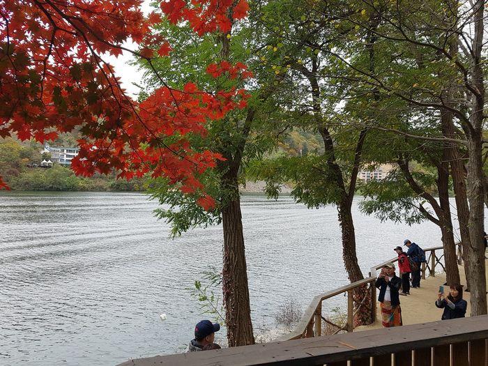 Lakeview Autumn