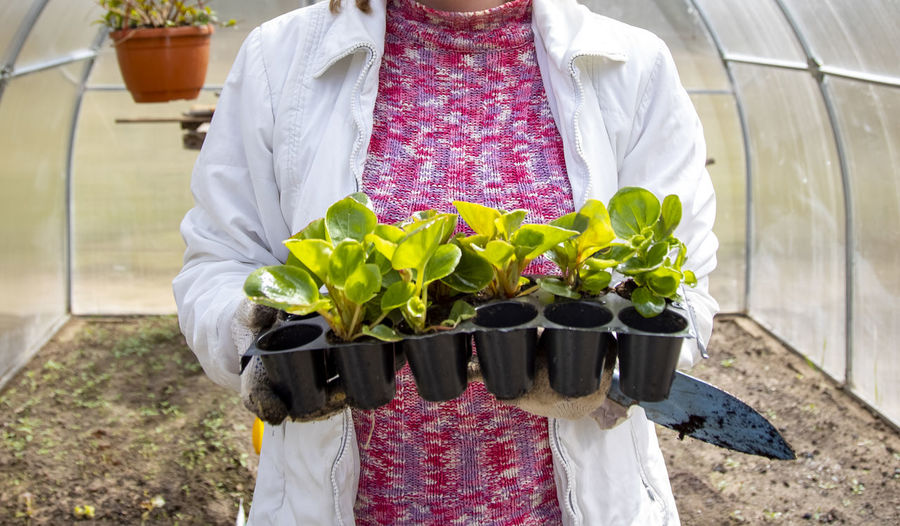 Midsection of woman holding white flowering plants