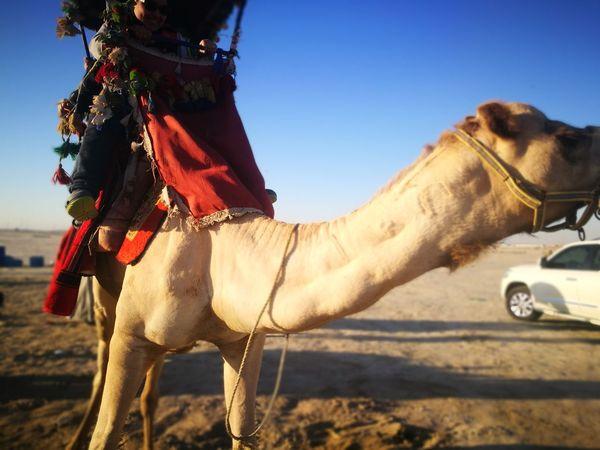 Domestic Animals Horse One Animal Jockey Animal Themes Horseback Riding Mammal First Eyeem Photo