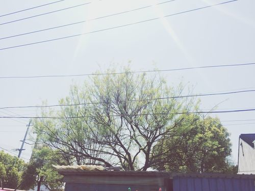 Everyday watch you. Hello World Enjoying Life Relaxing Trees And Sun