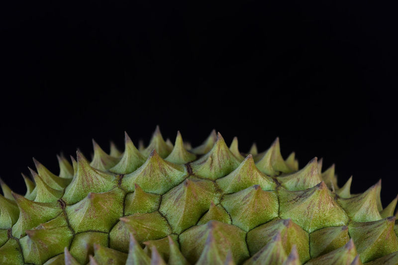 Close-up of durian over black background.