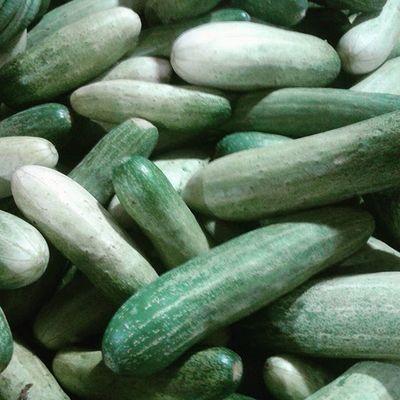 Cucumbers alias mentimun atau bonteng. Di kukus adem buat panas dalem 😁 Cucumbers Vegetables Mentimun Green_green healthfoods