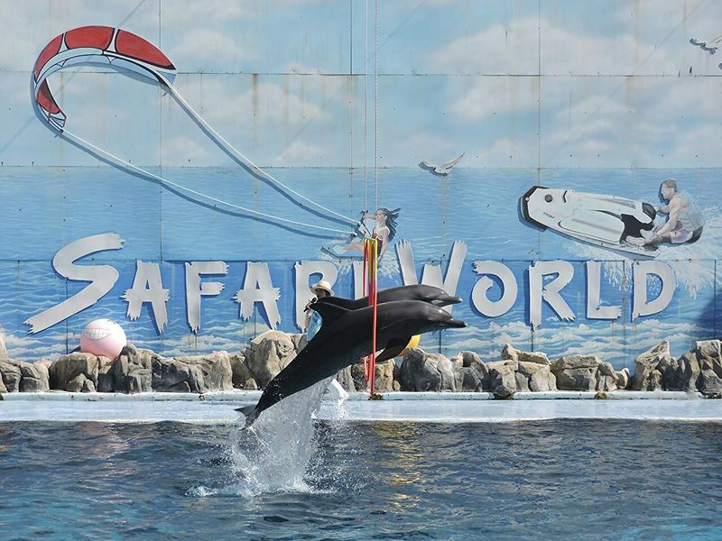 Dolphins Stuntshow at Safariworld , Thailand Motion Rings Watersplash Waterstunts Jumpshot Jump Wateranimals Sealife Entertainment TimedSnap Perfect Timing Wildlife Trained Friends Obstacles Win Victory Amazing Thailandtravel Thailand Trip Spectacular