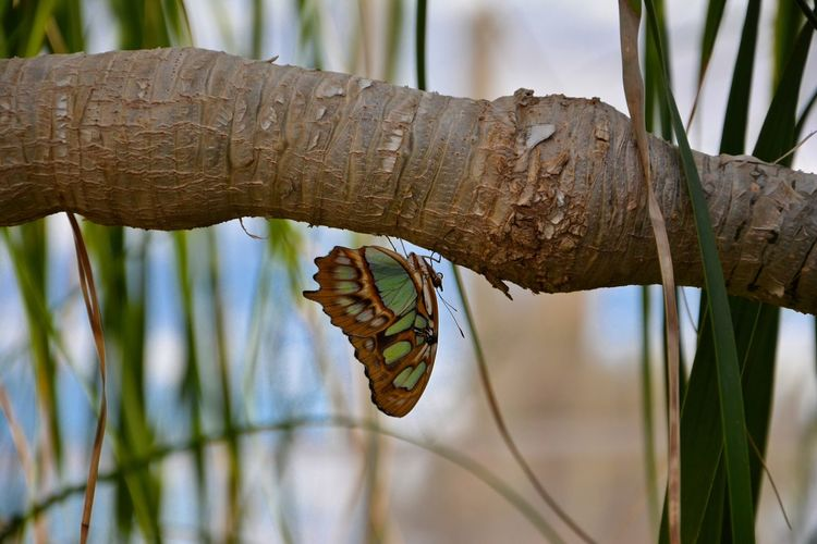 Animal Themes Animal Wildlife Animals In The Wild Beauty In Nature Branch Butterfly Butterfly - Insect Close-up Day Focus On Foreground Fragility Growth Insect Leaf Nature No People One Animal Outdoors Plant Tree