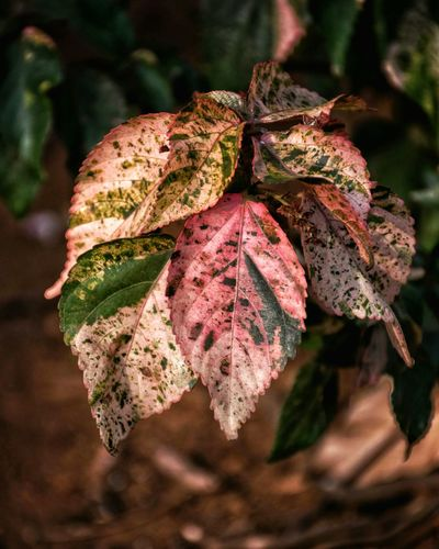 EyeEm Selects No People Leaf Close-up Nature Plant Pink Color Outdoors Day Beauty In Nature Traveldiaries Picoftheday Scenics Moodygrams Best EyeEm Shot Beauty In Nature Travel Destinations Low Angle View Nature Tree Textile Multi Colored Illgrammers Agameoftones