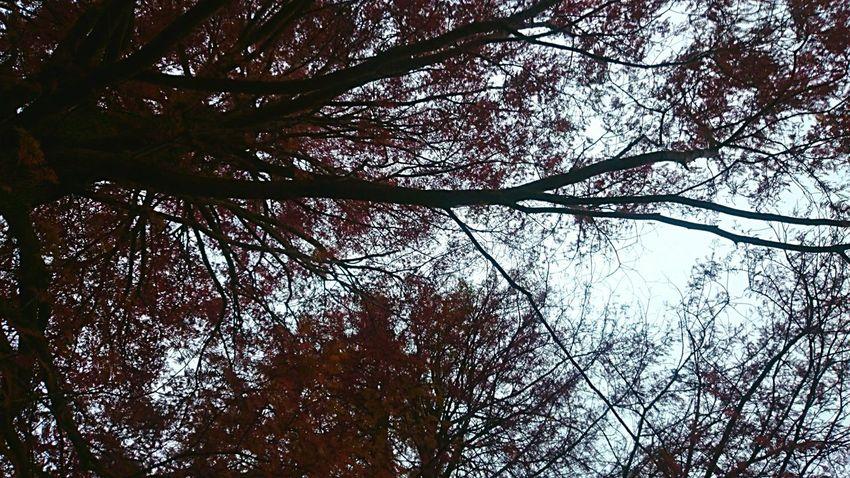 EyeEm Nature Lover Autumn Light And Shadow EyeEm Best Shots