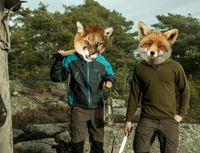 No explanation needed. Nature Animals Animal Funny Good Weather Wild Wildlife Edit Fox Puma Axe Hiking