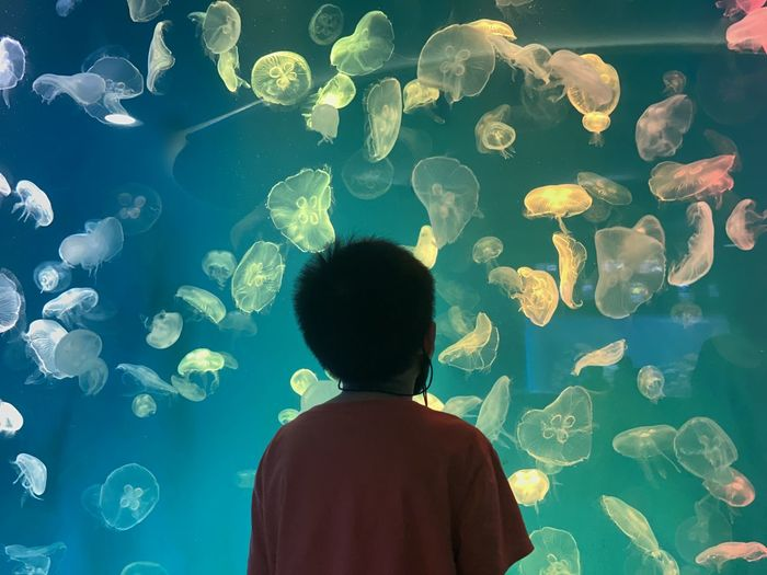 Jellyfish boy