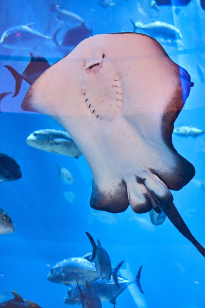Fishes 🐠 Sea Life Aquarium Under Water Under Water Photography Animal Themes Animal Wildlife Animals In The Wild Aquarium Blue Close-up Day Fish Fishes Large Group Of Animals Nature No People Outdoors Sea Sea Life Swimming Under Water Life Under Water Photograpgy UnderSea Underwater Water