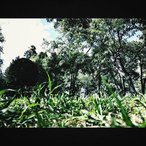 Nature Plants Landscape Enjoying Life