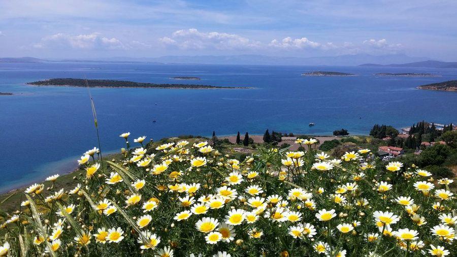 Close-up of flowers against calm blue sea