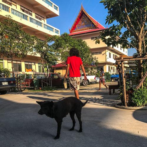 Full length of a dog on street