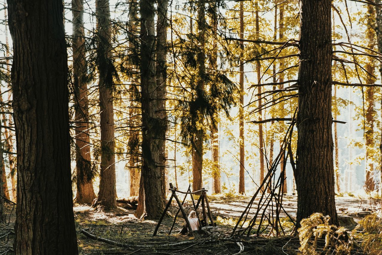 Beauty In Nature,  Branch,  Camping,  Day,  Forest