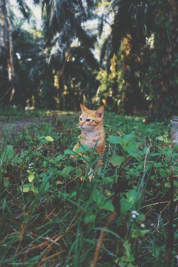 🐈 Cat Portrait