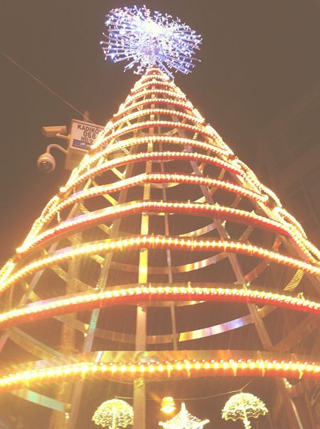 Christmas Tree Holylight Given To The