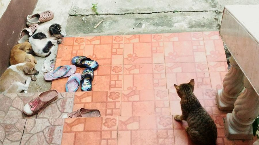 Cat And Dog EyeEm Selects Cat And Dog Cat Dog Puppy Look House Home Friend Family Pet Animal Wildlife Wildlife Animal Shoes Lovely Life Lifestyle Cute