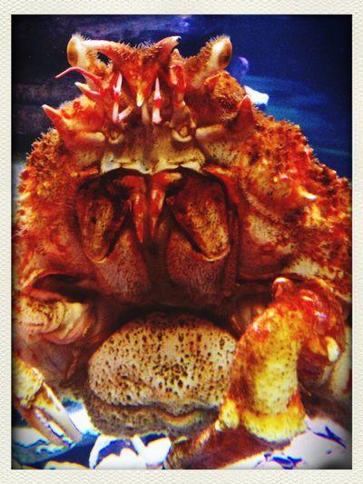 Crab Macro Get Close Aquarium