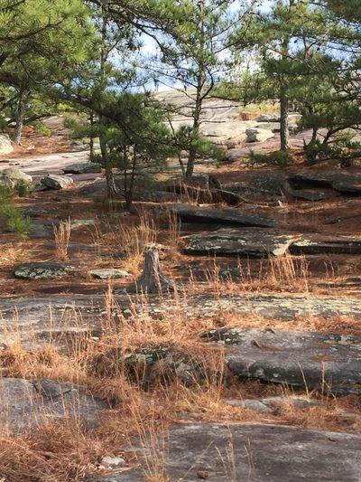 Stone Mountain GA Rocks And Minerals Granite Giant