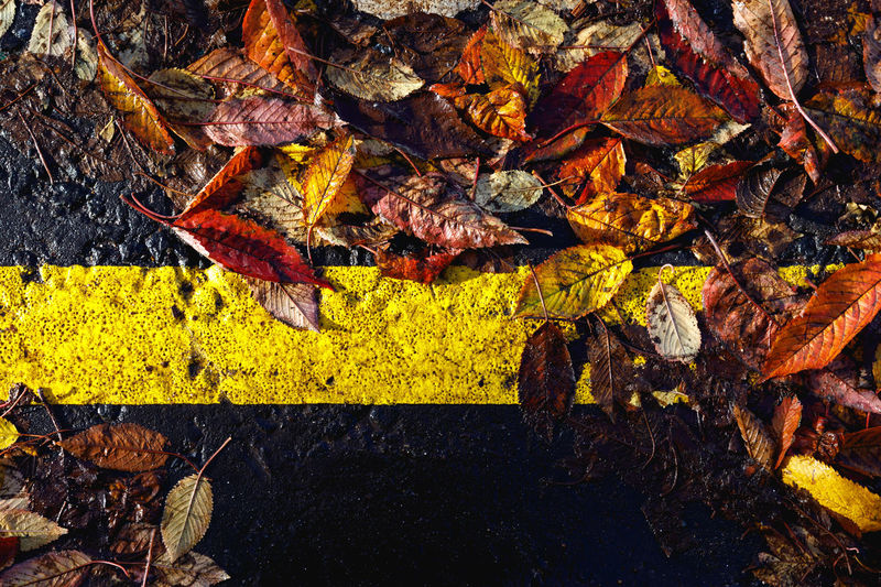 Autumn in London Leaf Autumn Plant Part Change No People Nature Dry Day Leaves Yellow High Angle View Falling Close-up Outdoors Beauty In Nature Fragility Orange Color Vulnerability  Plant Rock Natural Condition Maple Leaf Autumn Collection Fall London Autumn Mood